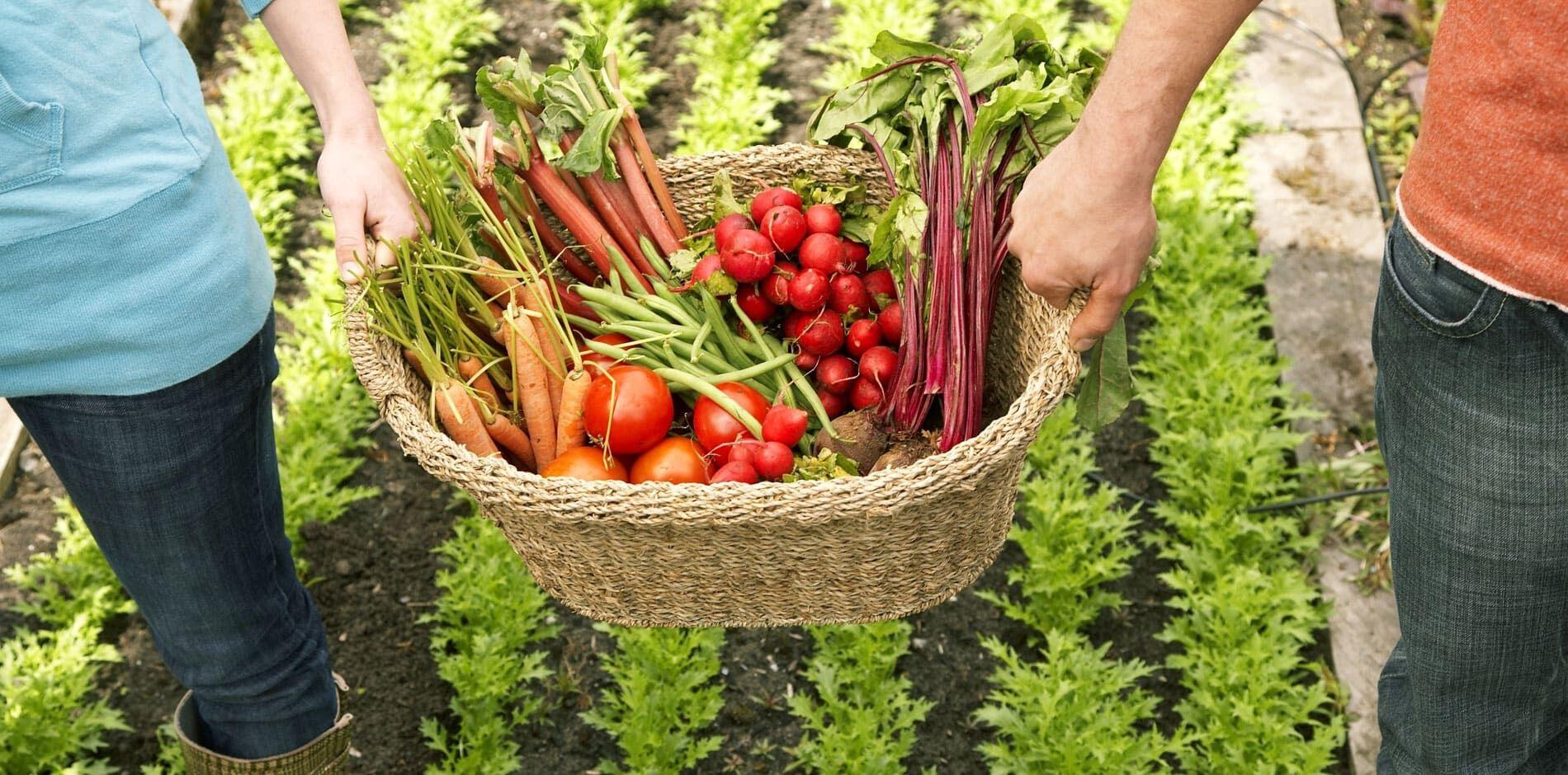 Hotels mit vegetarischer Küche