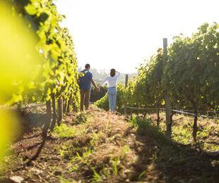 Hotels in Weinregionen
